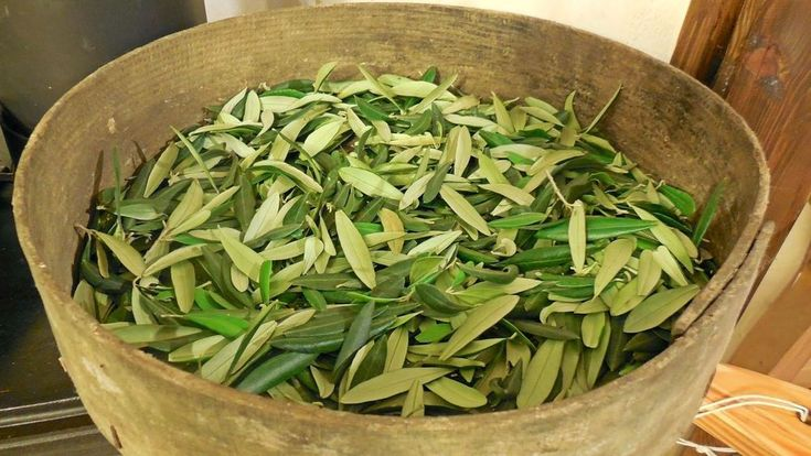 TEA Olive Tree Leaves, Greek, Soft Dried, Organic, Herbal, Juice, Vegan, Healthy #oliveleaves