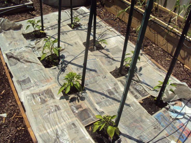 b gardening is for beans - Google Search