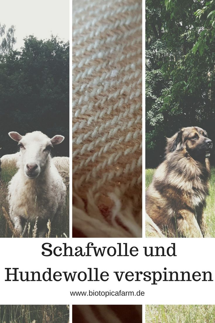 Hundewolle und Schafwolle: Vom Scheren, übers Waschen, bis hin zum Verspinnen. Diese Anleitung verrät dir wie du es machst!