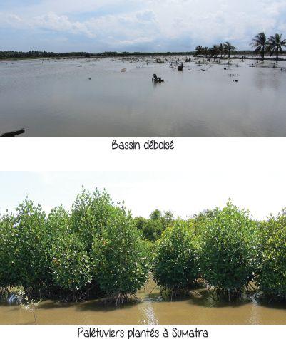 La plantation d'arbres en Indonésie en développement naturel écologique et culturel.