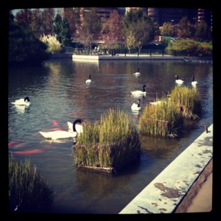 Little swan lake - Santiago Chile