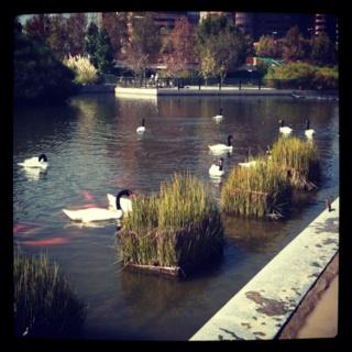 Little swan lake - Santiago Chile