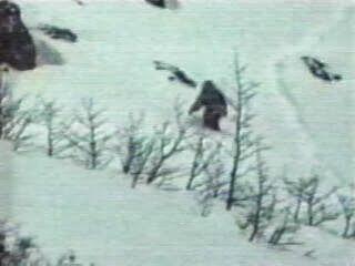 'Bigfoot' DNA Matches Rare Polar Bear : British Geneticist - UFO News | Aliens | UFO Sightings | Space News | UFO 2016