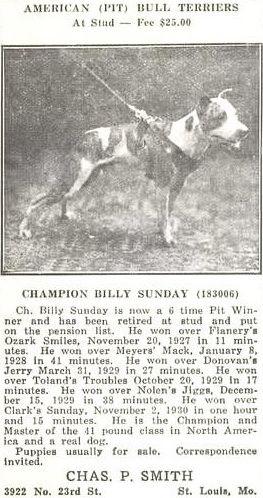 Ch Billy Sunday