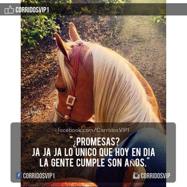 Mejores 52 imgenes de Corridos vip en Pinterest  Frases
