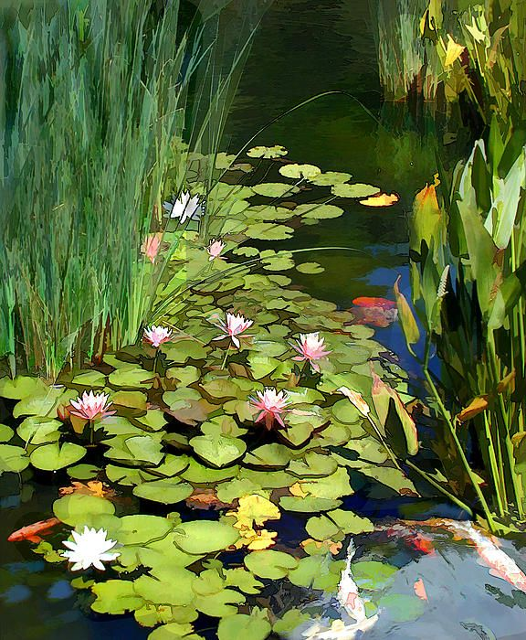 1000 images about art water lillies on pinterest lotus for Koi fish pond lotus