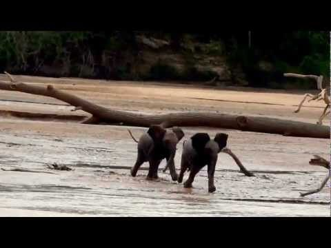 Baby elephants race to find their mothers (VIDEO) » DogHeirs   Where Dogs Are Family « Keywords: elephant, running, race, elephants
