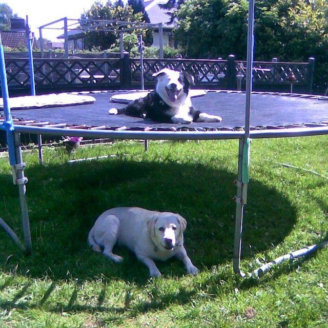 Tak til Eva for de to flotte drenge på billedet :) #black #blackfriday #hund #hunde #hundeliv #doglife #dogs #dog #sommer #sol #sun #sport #spring #pote #poter #potebox #paw #paws #box #boks #danish #dansk #danmark #denmark
