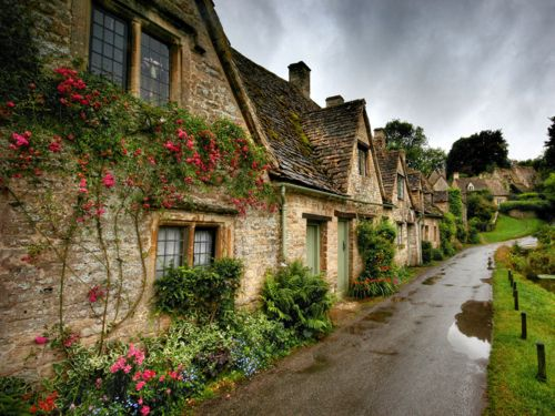 Climbing Rose,  Arlington Row, Bibury, Gloucestershire