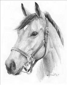 Resultado de imagen de Pencil Drawings of Horses Heads