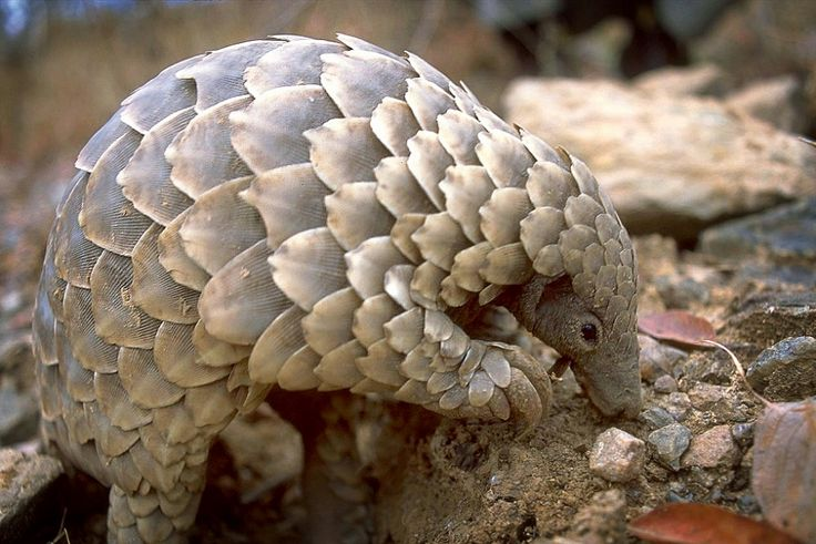 More than three tonnes of pangolin scales worth HK$17 million have been found hidden in two shipping containers that arrived in Hong Kong from Africa.