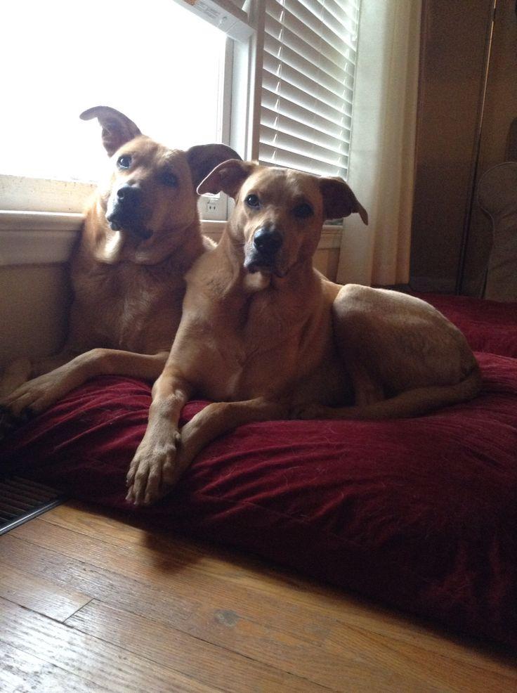 Heidi and Otis