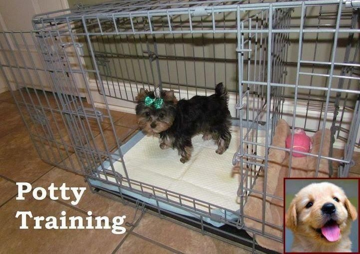 House Training A Puppy In 7 Days And How To Help Dog Behavior