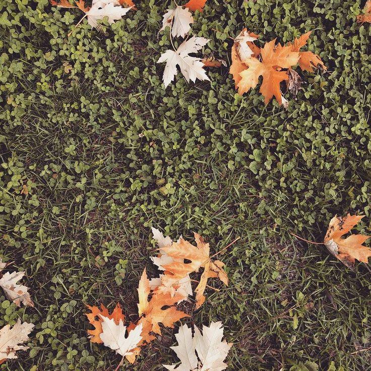 La strada verso casa...#autunno #vda #foglie #insta#chezhcdc #fenis #casa