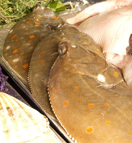 Corkers is a great 'Plaice' for seafood! A corny joke but the old ones are sometimes the best...