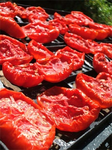How To Dry Tomatoes And Tips For Storing Dried Tomatoes. Get how-tos at http://www.tomatodirt.com/drying-tomatoes.html.