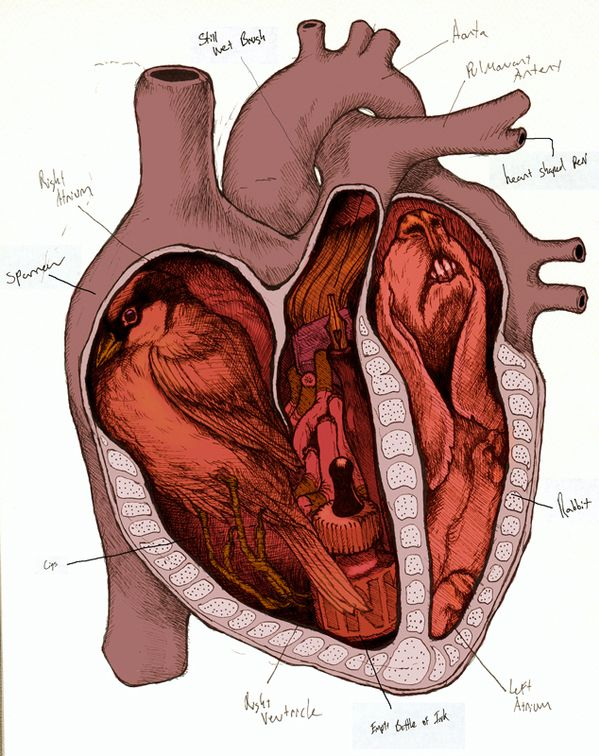 333 best Heart images on Pinterest | My heart, Human heart and ...