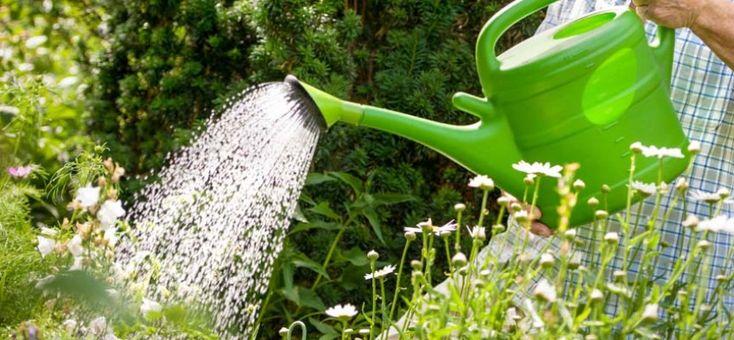 EL RIEGO ¿Como regar nuestro huerto para que nuestras plantas y hortalizas crezcan?. Tres elementos debemos de tener en cuenta y bien cuidados para que nuestro huerto crezca fuerte y sano. Un suelo rico en nutrientes, una buena exposición al sol y un riego equilibrado que mantenga la humedad correcta de nuestro huerto. Si