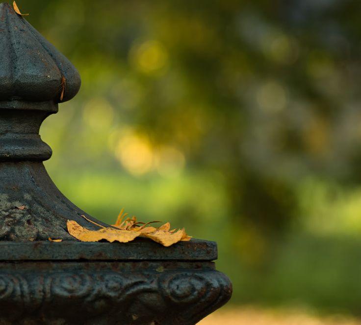 Autumn 04 - Autumn set Parma
