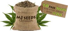 is buying pot seed online legal?
