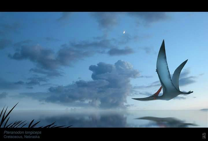 Pteranodon longiceps. Art by Serban Gabriel. They lived during the late Cretaceous geological period of North America in present-day Kansas, Alabama, Nebraska, Wyoming, and South Dakota.