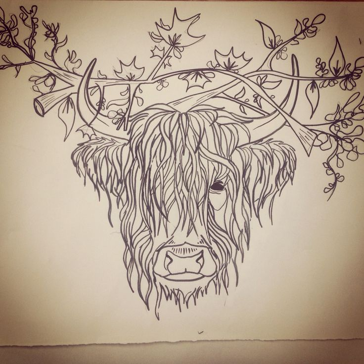 Line Drawing Cow Face : Silly highland cow sketch wallpapers backgrounds