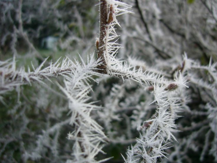 Words and Pictures: In the bleak midwinter