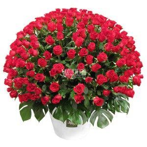 """В зависимости от выбранного Вами количества роз, может использоваться либо керамический горшок либо корзина. Или же по вашему желанию. Корзина из 101 красной розы сорта """"Фридом"""" - невероятно красивый и якрий букет, который точно придется по вкусу любой девушке."""