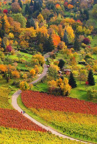ღღ Colourful Autumn and Vineyards in Stuttgart Rotenberg, Germany. Nature is the best painter!!
