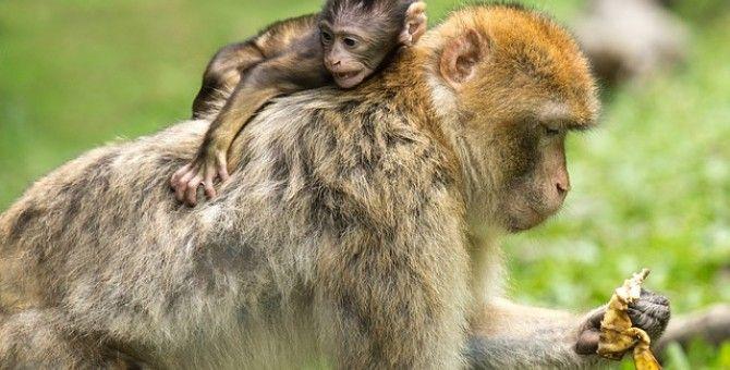 A king who had a monkey