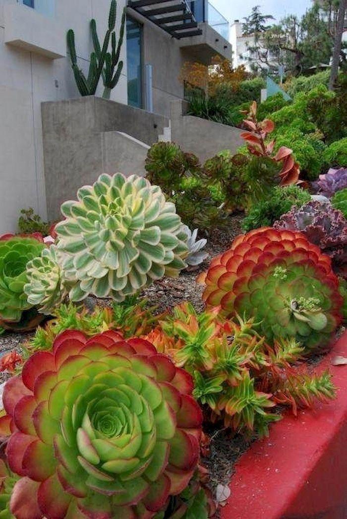 Check This Out House Landscaping Sukkulenten Garten Diy Gartenbrunnen