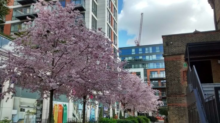 Blossom in Ealing