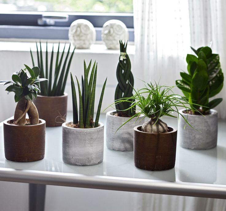 Samling af grønne planter, som er dekorative og samtidig meget nemme at passe. #nemmeplanter #grønneplanter #grønnestueplanter #livivindueskarmen #houseplant #indoorplant #plantorama