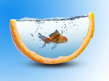 portakallı balık