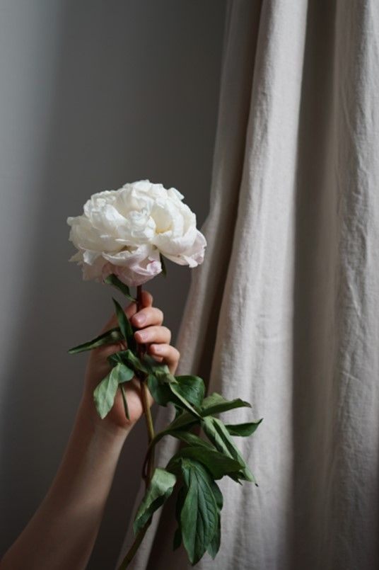 Plant Aesthetic, Simple Aesthetic, Nature Aesthetic, Flower Aesthetic, White Aesthetic, Hand Flowers, Flowers Nature, Simple Interior, Minimalist Interior