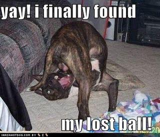LOL Dogs!: