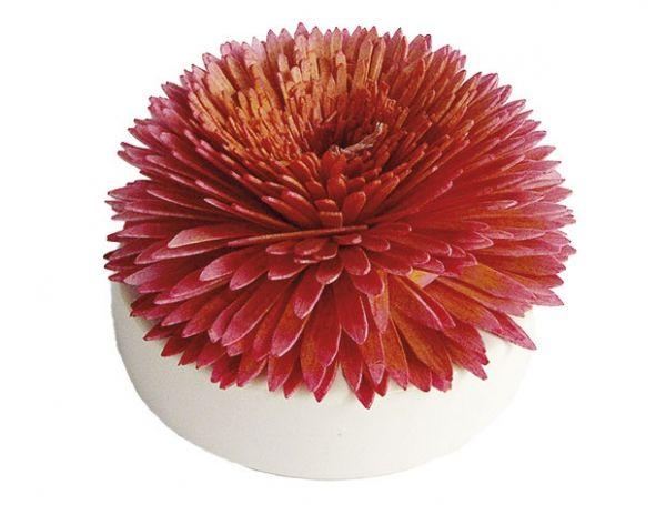 Big Bloom Diffuser von Breathe: Das schlichte und elegante Design des Big Bloom Raumduft Diffusers passt perfekt in jedes Ambiente und verteilt die ausgewählten Raumdüfte über Monate