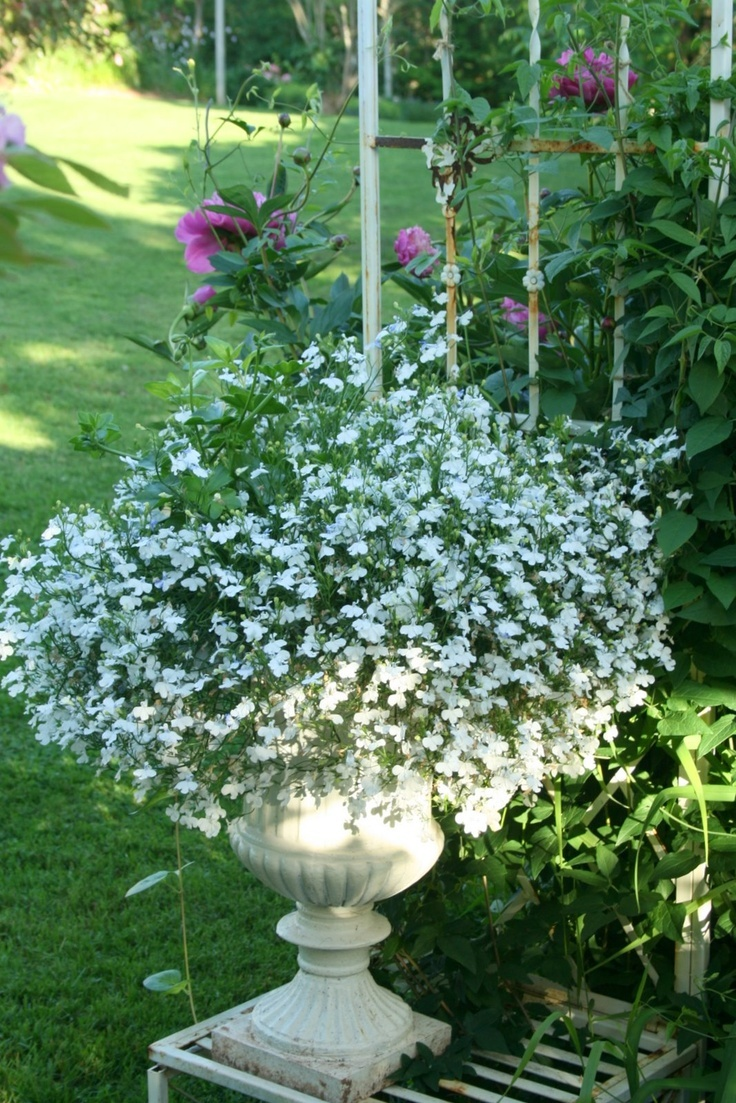 17 Best Images About Containers On Pinterest Window Boxes Container Plants And Fall Containers