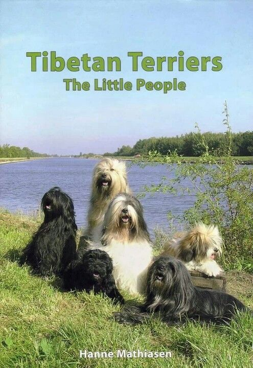 "Tibetan Terriers  ""The Little People"" - Hanne Mathiasen"
