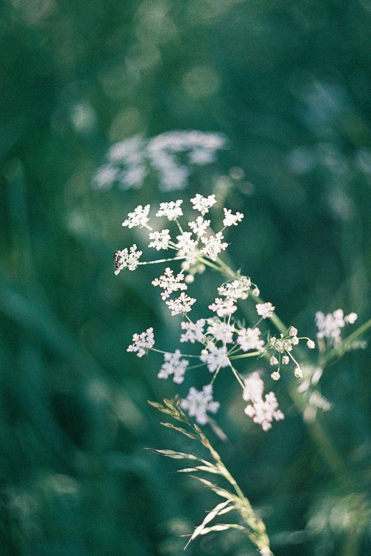 swirly helios bokeh | film photography | 35mm photography | film.lav