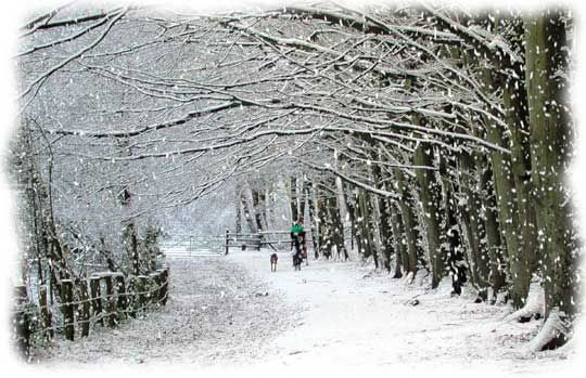Google Image Result for http://www.sistersrunningthekitchen.com/wp-content/uploads/2011/01/snow-scene-finish11.jpg