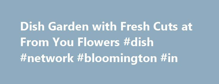 Dish Garden with Fresh Cuts at From You Flowers #dish #network #bloomington #in http://papua-new-guinea.nef2.com/dish-garden-with-fresh-cuts-at-from-you-flowers-dish-network-bloomington-in/  # Dish Garden with Fresh Cuts Shipping Information Same Day Flower Delivery is available in the USA from our network of local florist partners. Orders for flower delivery today must be placed by 3pm in the delivery zip code. Next day delivery options or dates in the future are also available. Cut off…