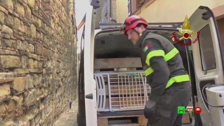 Vigili del Fuoco - Camerino - Recupero beni da abitazione privata - www....