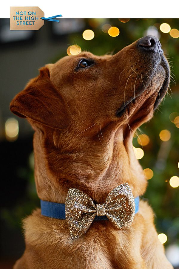 Image result for decorate dog with glitter
