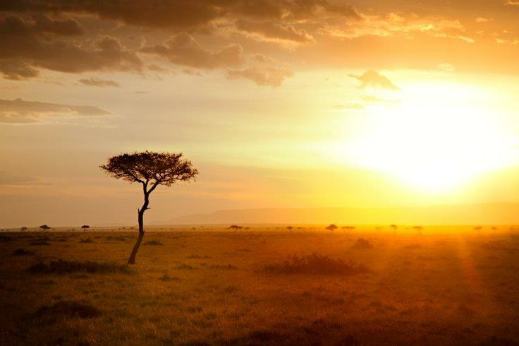 """I had a wild experience in the Masai Mara."" Win the holiday of a lifetime worth R500 000 with FNB Private Clients."