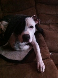Rocky, Fur Angels dog who is up for adoption!  Such a sweet boy...high energy, playful, will be a great running partner!: Boy High Energy, Fur Angels, Angels Dog, Sweet Boy High, Running Partner