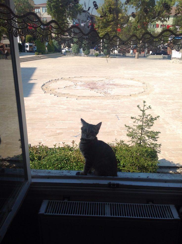 Arap kızı camdan bakıyor