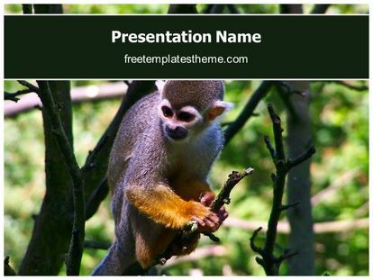14 best free wildlife animals powerpoint ppt templates images on download free monkey powerpoint template for your powerpoint presentation toneelgroepblik Choice Image