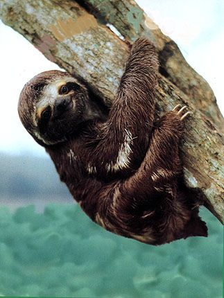 I have this inexplicable love for sloths and slugs.
