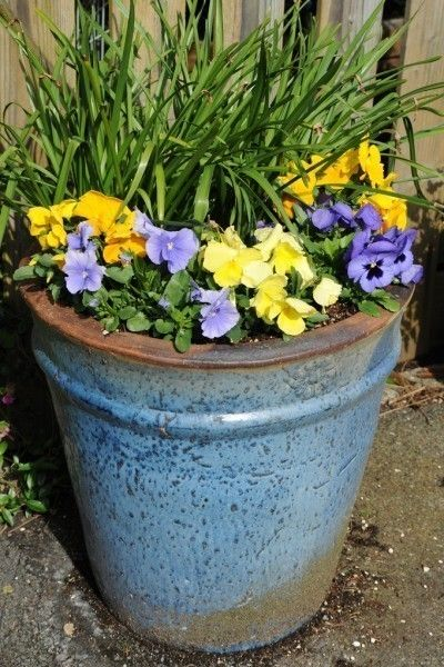 Ants In Potting Soil u2013 Tips For Killing Ants In Containers | Ant Insects and Plants